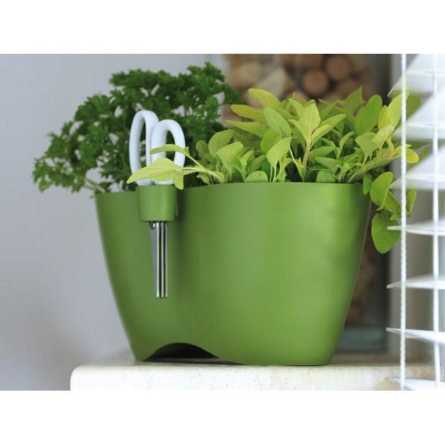 Fioriere per erbe aromatiche piante aromatiche in vaso for Erbe aromatiche in vaso